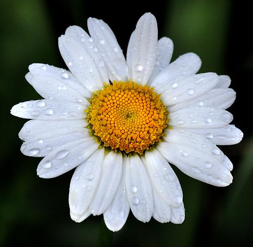 comments 4 comments tags bloom flower garden gardening macro ... Green Garden Spider